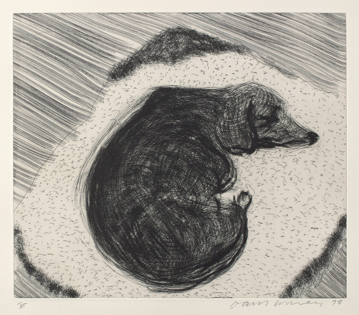 David Hockney Dog Etching No3, from Dog Wall, original etching print for sale