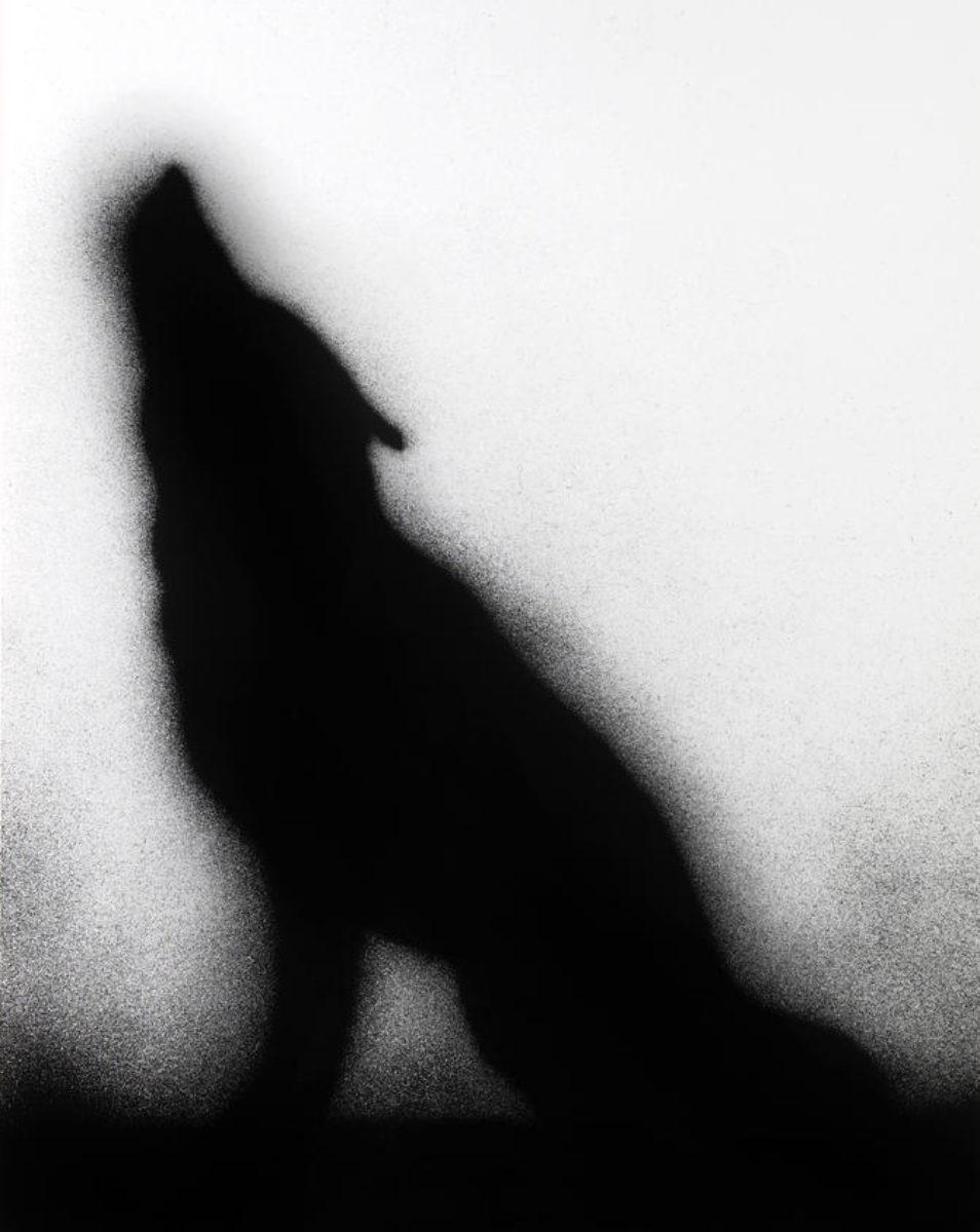 Ruscha coyote