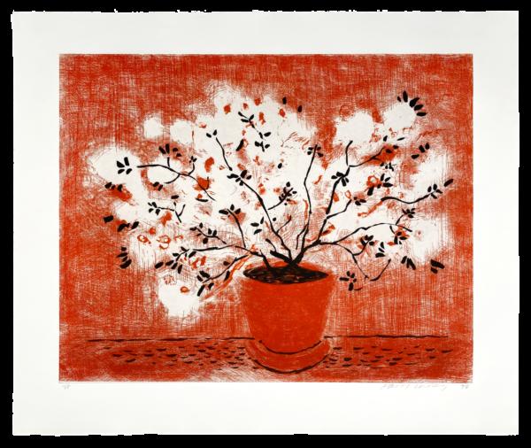 Red Wire Plant - David Hockney